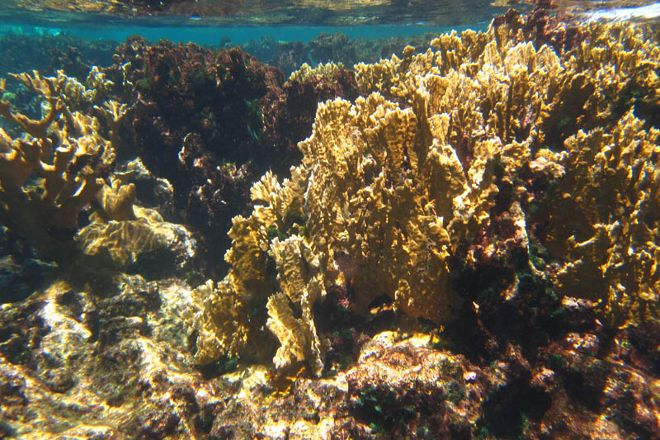 Buck Island Reef National Monument, St. Croix, U.S. Virgin Islands