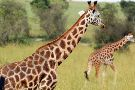 Primate World Safaris