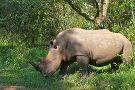 Rhino Fund Uganda ( Ziwa Rhino Sanctuary)