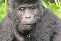 Bamboo Ecotours, Kampala, Uganda