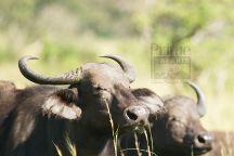 Prime Safaris & Tours, Kampala, Uganda