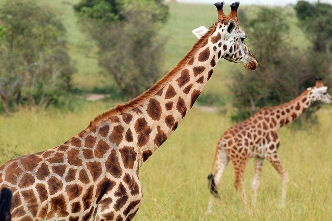 Primate World Safaris, Kampala, Uganda