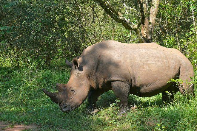 Rhino Fund Uganda, Nakitoma, Uganda