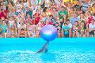 Nemo Odessa Dolphinarium