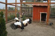 Zoopark Limpopo, Medenychi, Ukraine