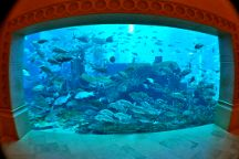 The Lost Chambers Aquarium, Dubai, United Arab Emirates