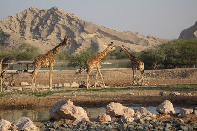 Al Ain Zoo, Al Ain, United Arab Emirates