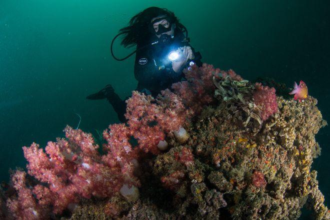 Divers Down, Fujairah, United Arab Emirates