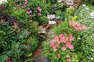 Driftwood Garden East Sussex