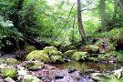 Falling Foss Tea Garden and Waterfall