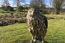 Kintail Birds of Prey Argyll