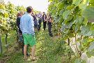 Trevibban Mill Vineyard & Orchards
