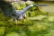 Birdland, Bourton-on-the-Water, United Kingdom