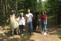 Bluecaps Llamas, Wadhurst, United Kingdom