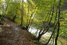 Calderglen Country Park, East Kilbride, United Kingdom