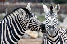 Colchester Zoo, Colchester, United Kingdom