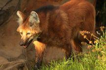 Exmoor Zoo, Barnstaple, United Kingdom