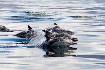 Gairloch Marine Life Centre & Cruises, Gairloch, United Kingdom