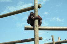 Monkey World, Wareham, United Kingdom