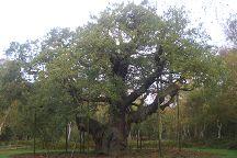 Sherwood Forest, Nottinghamshire, United Kingdom