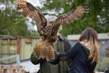 Turbary Woods Owl and Bird of Prey Sanctuary, Preston, United Kingdom
