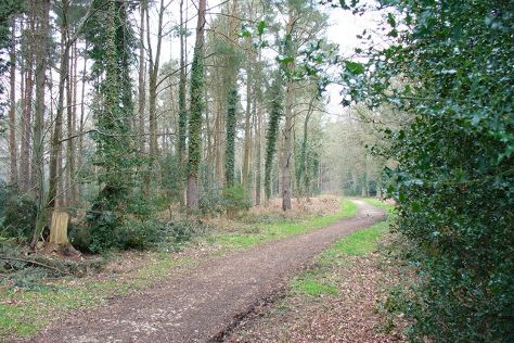 Alice Holt Forest, Farnham, United Kingdom