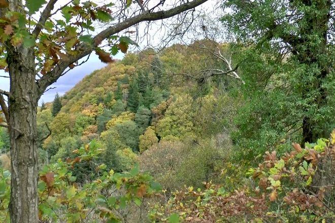 Allen Banks and Staward Gorge, Bardon Mill, United Kingdom