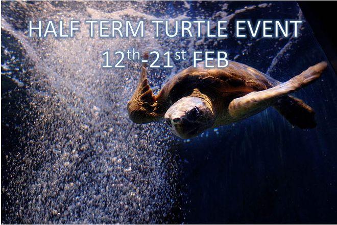 Blue Reef Aquarium, Newquay, United Kingdom