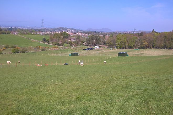 BobCat Alpacas, Edinburgh, United Kingdom