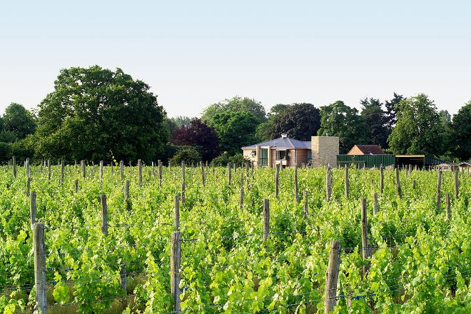 Bothy Vineyard, Abingdon, United Kingdom