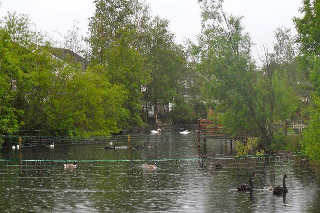 Broughshane Environment Waterfowl & Wildlife Trust, Broughshane, United Kingdom