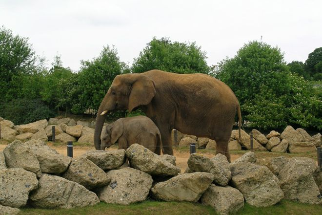 Colchester Zoo, Colchester, United Kingdom