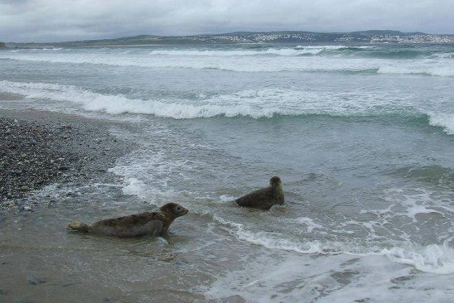 Cornish Seal Sanctuary,SEA LIFE Trust, Gweek, United Kingdom