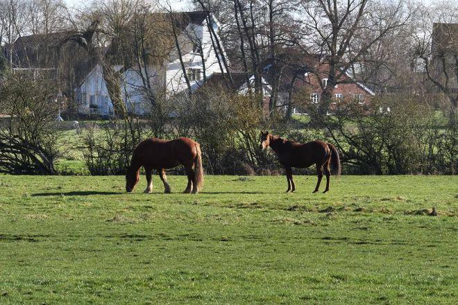 Easton Farm Park, Easton, United Kingdom