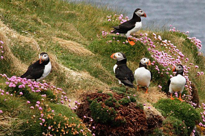 Handa Island Wildlife Reserve, Handa Island, United Kingdom