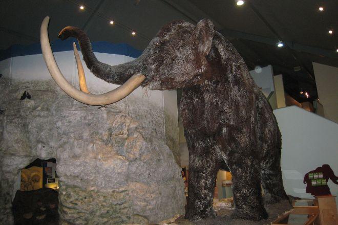 Hull & East Riding Museum, Kingston-upon-Hull, United Kingdom