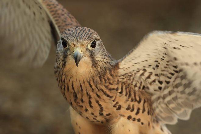 Imperial Bird of Prey Academy, Billericay, United Kingdom