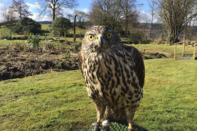 Kintail Birds of Prey Argyll, Dalmally, United Kingdom