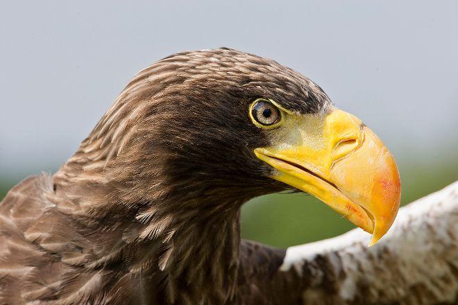 National Centre for Birds of Prey, Helmsley, United Kingdom