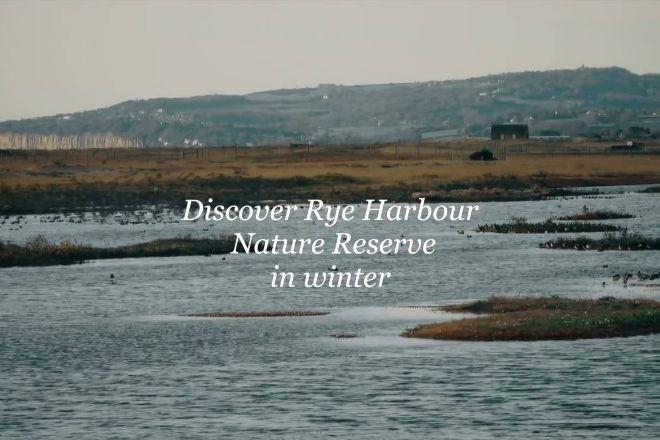 Rye Harbour Nature Reserve, Rye, United Kingdom