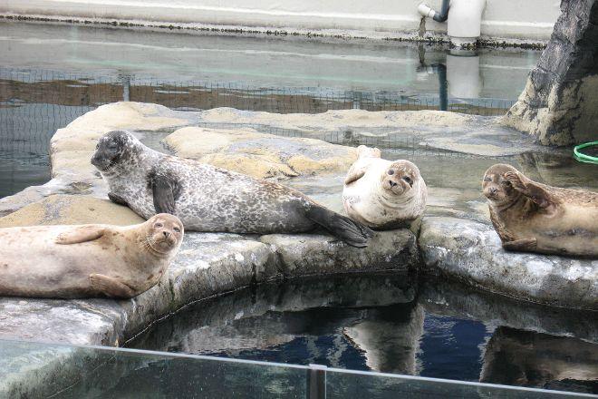 Tynemouth Aquarium, Tynemouth, United Kingdom