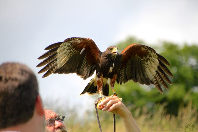 West of England Falconry, Bath, United Kingdom