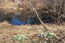 Acton Arboretum