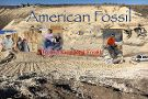 American Fossil