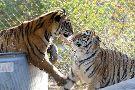 America's Teaching Zoo at Moorpark College