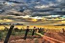 Arizona Hops and Vines