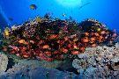 Atlantis Submarines Maui