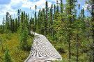 Big Bog State Recreation Area