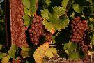 Big Little Wines