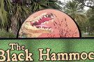 Black Hammock Adventures